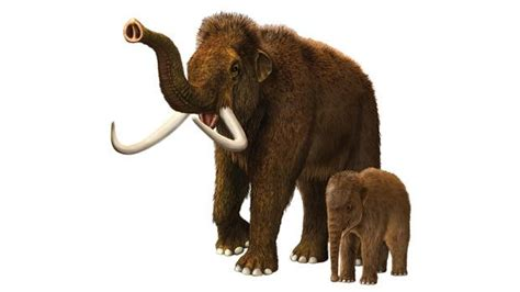 Prehistoric beasts' untimely death