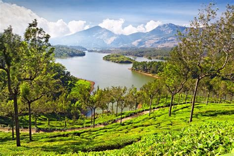 The Tea Experience - Best Tea Plantations in India
