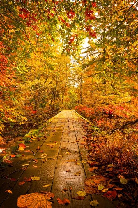 Warm Path Pictures, Photos, and Images for Facebook