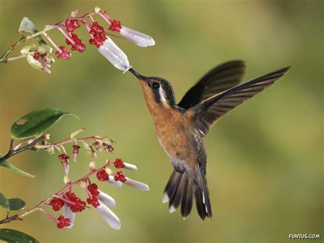 victorious star: Beautiful Wild Song Birds